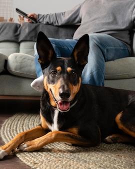 Gros plan propriétaire et chien souriant