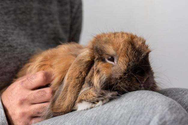 Gros plan propriétaire tenant lapin