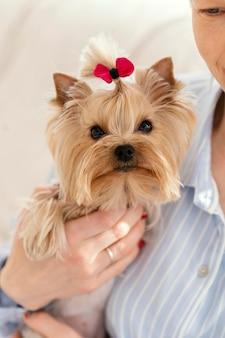 Gros plan, propriétaire, tenue, chien