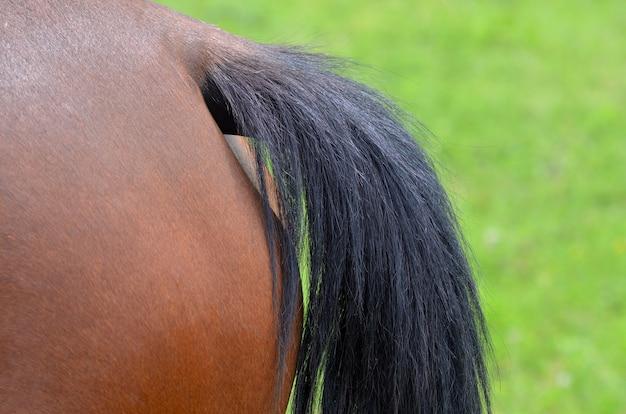 Gros plan, de, queue cheval
