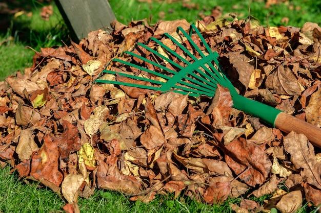 Gros plan: un râteau vert en métal est posé sur un tas de feuilles d'automne jaunies et fanées.