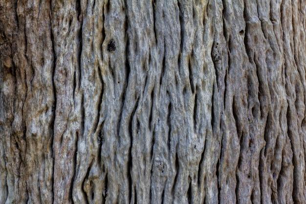 Gros plan, de, résumé, bois, texture