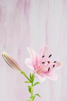 Gros plan, de, rose, nénuphar, fleur, contre, arrière-plan
