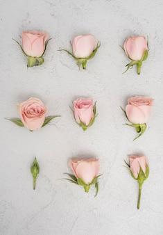 Gros plan, rose, roses, bourgeons, plat, poser