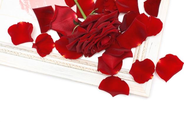 Gros plan sur la rose rouge et les pétales de détails