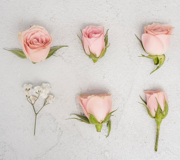 Gros plan des roses roses bourgeons vue de dessus