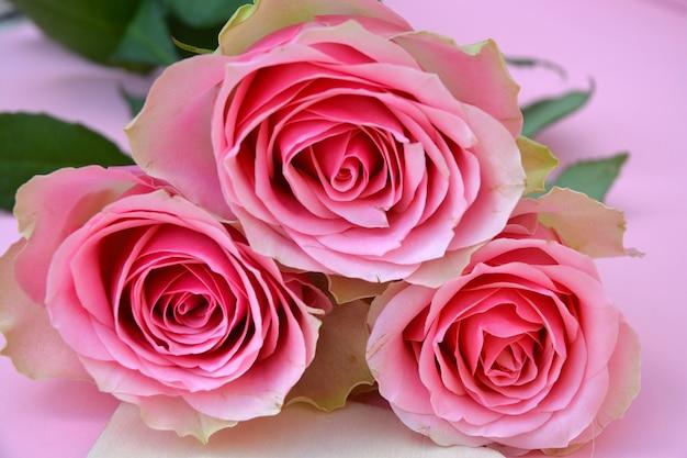 Gros plan de roses roses sur une surface rose