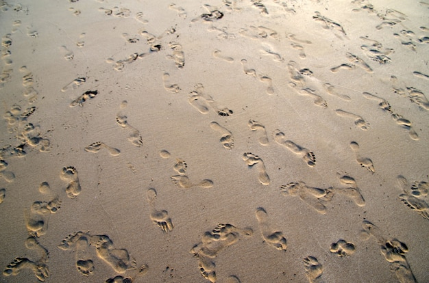 Gros plan de sable de corail