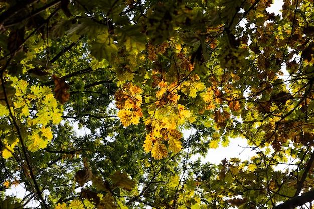 Gros plan sur la saison d'automne