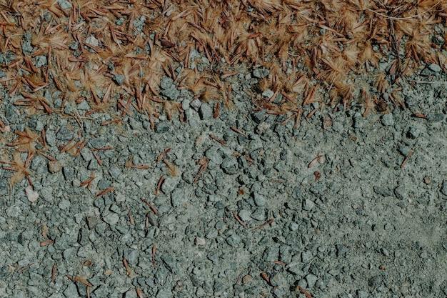 Gros plan de la saleté avec des feuilles sèches