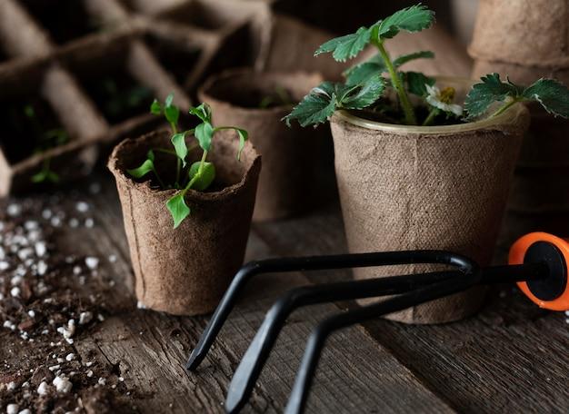 Gros plan des semis de plantes