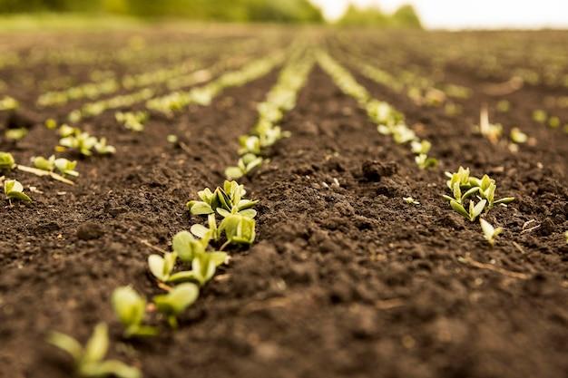Gros plan des semis sur la saleté