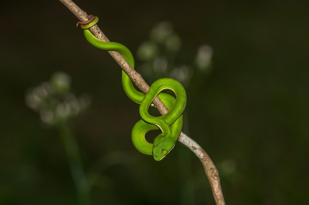 Gros plan serpent à lèvres jaune à lèvres vert