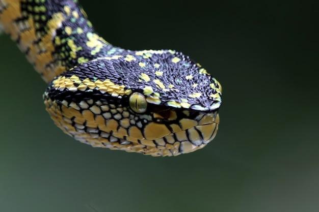 Gros plan de serpent vipère