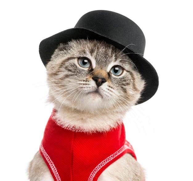 Gros plan, de, a, siamois, à, chapeau haut de forme, isolé, blanc
