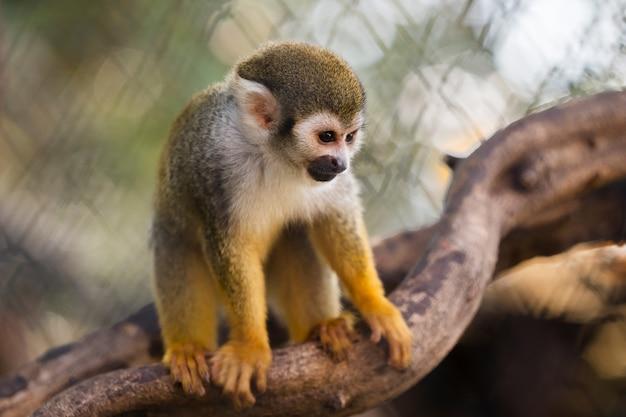 Gros plan singe écureuil au zoo