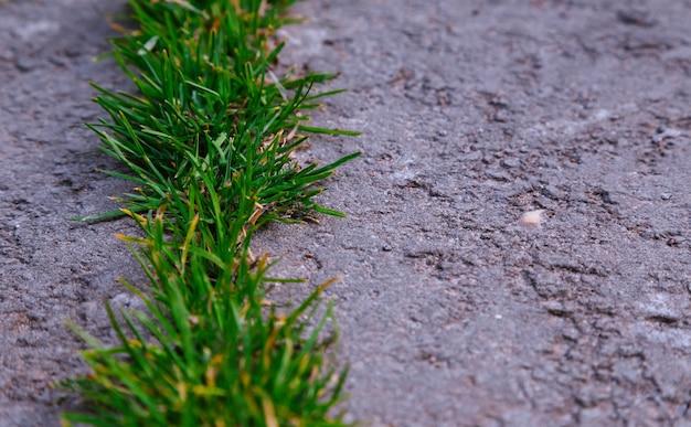 Gros plan sur le sol à l'extérieur avec de l'herbe verte et de l'asphalte