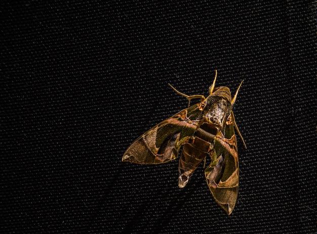 Gros plan de la sorcière papillon sur le mur