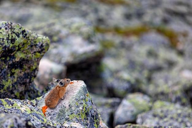 Un gros plan d'une souris brune