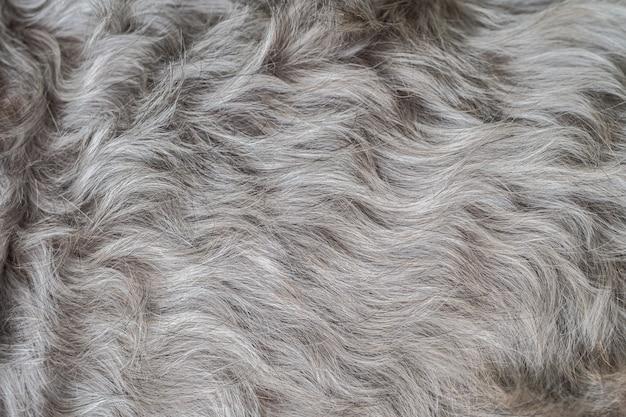 Gros plan surface schnauzer chien cheveux fond texturé