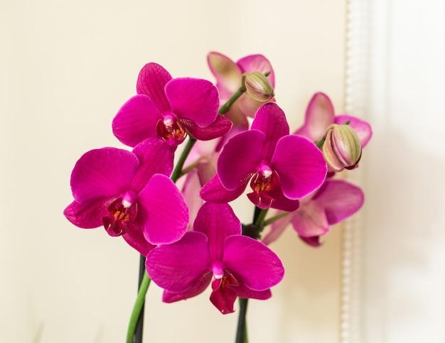 Gros plan d'un tas de belles orchidées roses