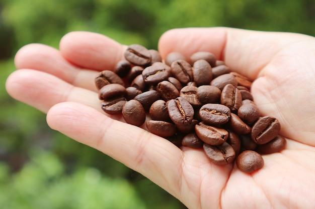 Gros plan des tas de grains de café torréfiés dans la main de l'homme