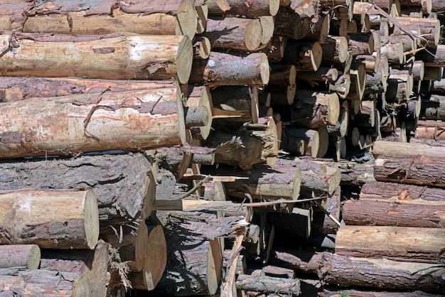 Gros plan de tas de troncs d'arbres dans une scierie, en perspective