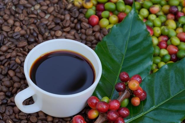Gros plan d'une tasse de café blanc avec fond de grains de café crus dans la lumière du soleil du matin.
