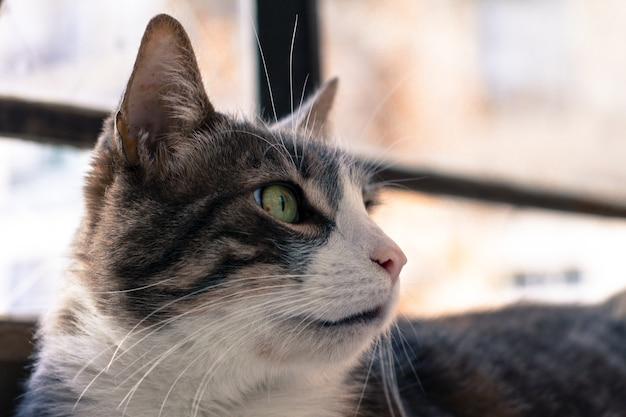 Gros plan de la tête d'un chat noir et blanc aux yeux verts
