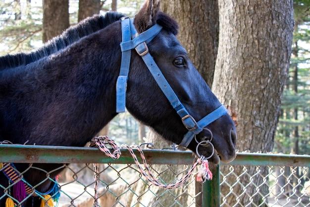 Gros plan de la tête de cheval noir