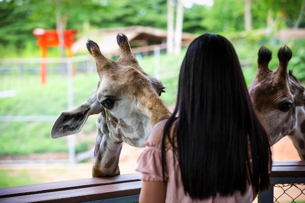 Gros plan tête girafe dans le zoo et jeunes femmes se nourrissent au premier plan