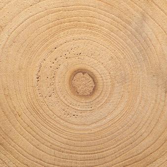 Gros plan de la texture de l'arbre
