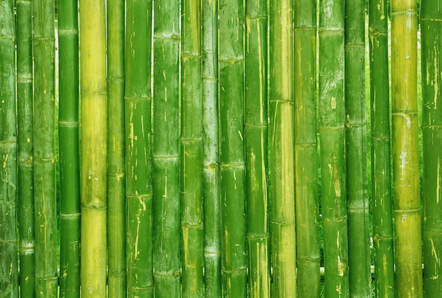 Gros plan de la texture de clôture de bambou vert.