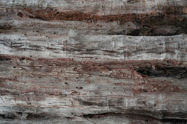 Gros plan de la texture du vieil arbre en décomposition. détail de l'ancien fond de texture bois.