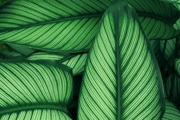 Gros plan de la texture de la feuille verte dans la forêt tropicale et le travail d'art design style concept éco nature.