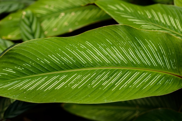 Gros plan de la texture des feuilles ou de l'arrière-plan