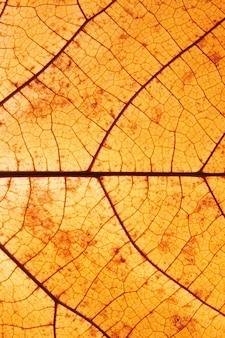 Gros plan sur la texture des feuilles d'automne avec le format vertical des veines