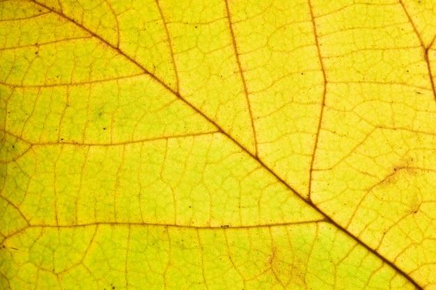 Gros plan sur la texture des feuilles d'automne avec des veines