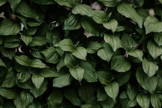 Gros plan d'une texture de feuilles