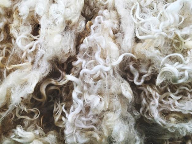 Gros plan sur la texture de la laine de mouton