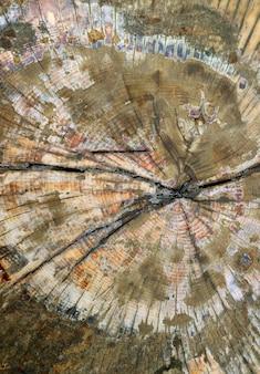 Gros plan sur la texture de la surface du rondin de bois coupé pour l'abstrait
