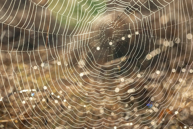 Gros plan sur une toile d'araignée dans des gouttes de rosée dans un champ tôt le matin ensoleillé.