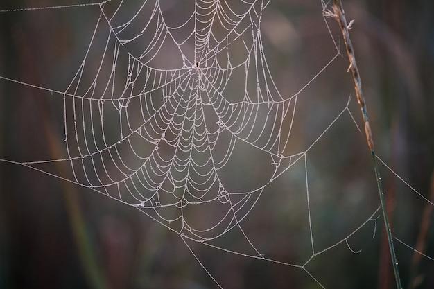 Gros plan, toile d'araignée, rosée, gouttes, pendre, herbe, pré, floraison