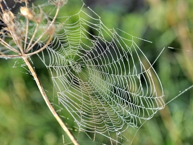 Gros plan sur la toile d'araignée