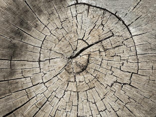 Gros plan sur un tronc d'arbre coupé rugueux. fond texturé de souche avec anneaux annuels circulaires