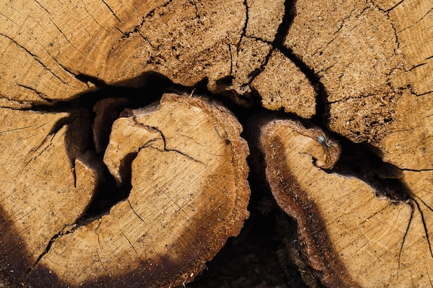 Gros plan, tronc arbre coupé