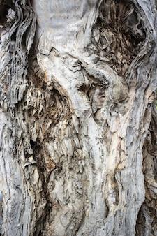 Gros plan d'un tronc d'arbre texturé