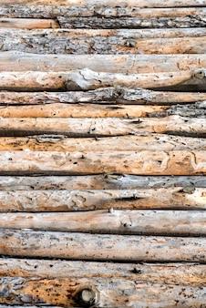 Gros plan de troncs de pins alignés