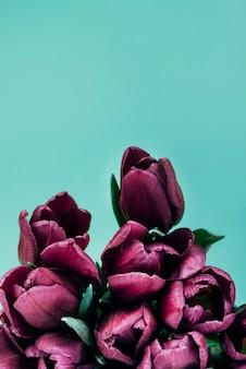 Gros plan de tulipes pourpres foncés sur fond turquoise