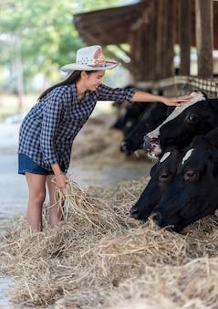 Gros plan sur les vaches nourries par l'éleveur